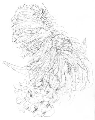 Coral Snail Bryozo LEVELS