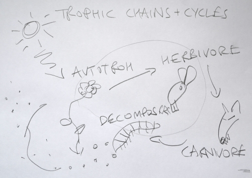 Trophic Cycles